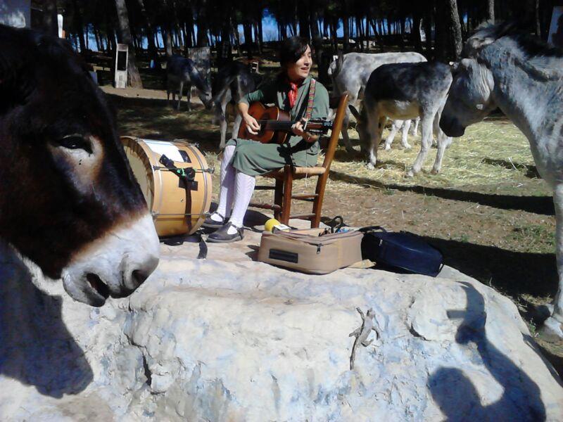 Concierto para los burros